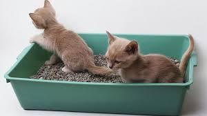 Bahan pengisi kotak kotoran kucing